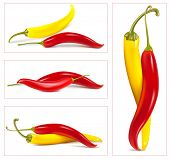 Vetor colorido hot chili peppers.