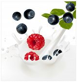Vector illustration. Ripe blueberries and raspberries falling into the milky splash. Background for