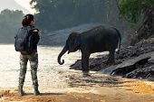 Traveler Women Backpack Standing And Seeing The Wild Elephant In The Beautiful Forest At Kanchanabur poster