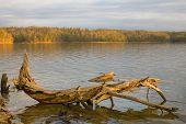 Driftwood At Dawn