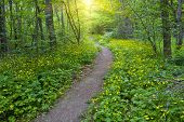 pathway in green forest