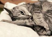 Sleeping Cat On A Sofa, Sleeping Kitten, Sleepy Cat Close Up, Animals, Domestic Cat, Relaxing Cat, M poster