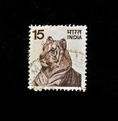 INDIA - CIRCA 1970s: A stamp printed in India shows  tiger, circa 1970s