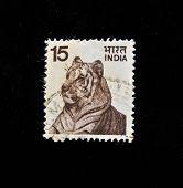 Índia - por volta da década de 1970: Um selo imprimido na Índia mostra tigre, por volta da década de 1970