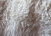 Light-gray fur texture