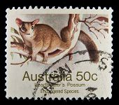AUSTRALIA - 1992: A stamp printed in Australia shows image of a possum, series, 1992