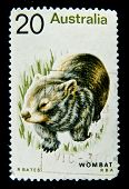 AUSTRALIA - CIRCA 1990s: A stamp printed in Australia shows image of a Wombat, circa 1990s