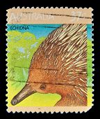 AUSTRALIA - CIRCA 1990s: A stamp printed in Australia shows image of a Echidna, circa 1990s