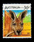 AUSTRALIA - CIRCA 1990s: A stamp printed in Australia shows image of a red kangaroo, circa 1990s