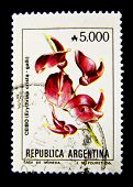 ARGENTINA - CIRCA 1980: A stamp printed in the Argentina shows flower Erethrinia crista - galli, cir