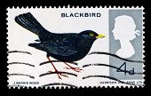 UK - CIRCA 1990s: A stamp printed in United Kingdom shows blackbird, circa 1990s
