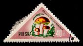 POLAND - CIRCA 1950s: A stamp printed in Poland shows the mushroom boletus circa 1950s.