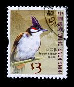 HONG KONG, CHINA - CIRCA 2006: A stamp printed in Hong Kong, China shows Red-whiskered Bulbul (Pycnonotus jocosus), circa 2006