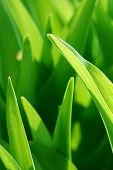 pic of green leaves  - CLose up of green leaves - JPG