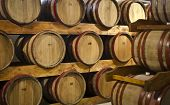 wine barrels in wine yard cellar