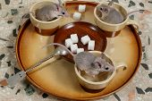 Close-up Three Mice On A Round Tray With Empty Coffee Cups And Plate Of Sugar . Top View.   (close-u poster