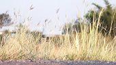 Flower Grass Soft, Flower Grass In Sunshine Light Morning Day Time, Flower Grass Soft For Background poster