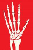 esqueleto de mão