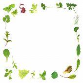 Herb And Lettuce Leaf Border