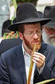 BNEI BRAK - SEPTEMBER 22: Religious young red-bearded Jew chooses ritual plant Lula before Sukkot Se