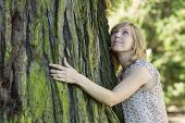 Woman hugging large tree trunk while looking up