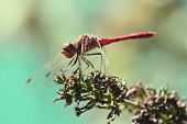 Dragonfly Resting On A Plant