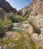 Spring In Ein Gedi National Park, Israel
