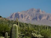 picture of superstition mountains  - View of Superstition Mountain outside of Apache Junction AZ with Saguaros in foreground - JPG