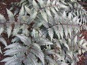 Shimmering Fern Plants