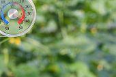 Temperature Meter In Cucumber Glasshouse