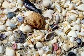 picture of treasure  - a treasure of seashells on a beach sanibel island florida - JPG