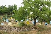 pic of bee keeping  - Meadow with bee hives and tree - JPG