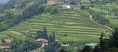 Terraceamento para o cultivo da videira em uma colina na Itália