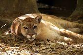 Lazy Predator