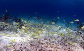 School Of Tropical Fish