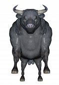 Agressive bull