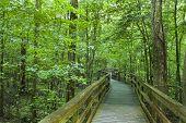 Boardwalk Congaree Nationaal Park