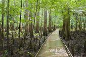 Congaree Nationaal Park