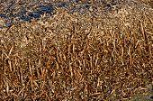 Dead Algae Carpet