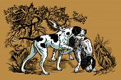 stock photo of english setter  - hunting dogs in forest - JPG