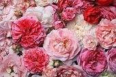 stock photo of centerpiece  - Beautiful pink english and french spring roses background - JPG