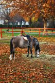Grazing Pony In The Park Late Autumn
