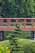 Crow In Japanese Garden