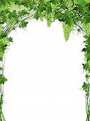Illustration of green grape vine frame