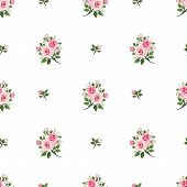 pic of english rose  - Vector seamless pattern with pink roses on a white background - JPG