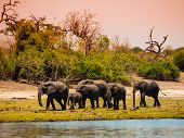 Elephant Family At The River