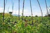 Lush Green Vegetable Plot Garden