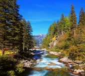 Rapid mountain stream of coniferous forests. Pastoral in the Alpine mountain valley in Austria. Casc
