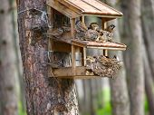 A starling house for birds somewhere in a forest
