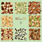 image of mixed nut  - Nuts and seeds mix decorative elements set vector illustration - JPG